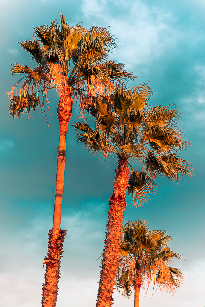 Photo of colorful palm trees